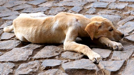 Ein Straßenhund liegt auf dem Boden